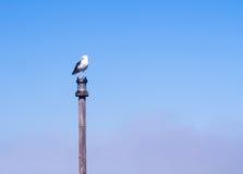 Seagull sitting on a bridge post in Walvis Bay, Namibia stock photo