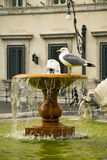Seagull sitting on fountain in front of Royalty Free Stock Photography