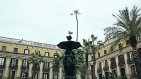 Seagull is Sitting on The Fountain Place Reial. Leaves of Palm Trees on Background of Old Houses stock video