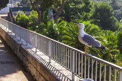 Seagull sitting on a metal fence, railings outdoor royalty free stock photos