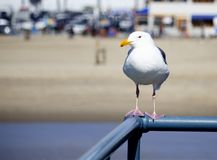Seagull Sitting on Metal Railing stock photo