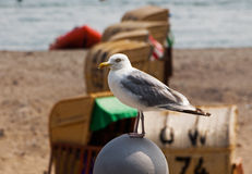 Seagull sitting on the parapet in front of  beach Stock Photo