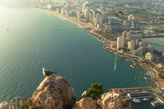 A seagull sitting peacefully and looking at the horizon while another flies through the heights in the Peñon de Ifach. Photography made in Calpe, Alicante royalty free stock images