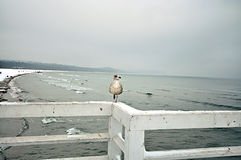 Seagull sitting on pier Stock Images