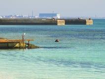 Seagull sitting on a pier near the sea royalty free stock photos