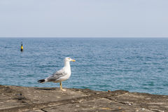 Seagull sitting on the pier Royalty Free Stock Images
