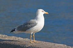 Seagull sitting on pier Stock Photo