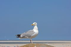 Seagull sitting on a pillar on a hot summer afternoon in Borkum Stock Photo