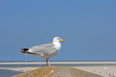 Seagull sitting on a pillar on a hot summer afternoon in Borkum Royalty Free Stock Images