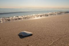 Shell lies on the beach of the Baltic Sea stock photos
