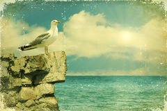 Seagull sitting on a rock. Stock Photo