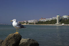 Seagull sitting on a rock Stock Photo
