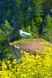 Seagull sitting on a rock Royalty Free Stock Images