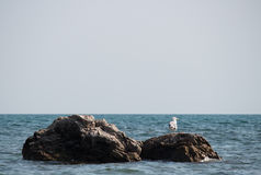 Seagull sitting on a rock by the sea Royalty Free Stock Photo