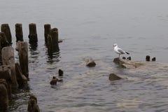 Seagull Stock Photo