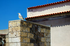 Seagull sitting at the roof of a house Royalty Free Stock Photography