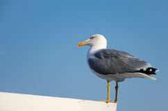 Seagull sitting on a roof. On sky background Royalty Free Stock Images