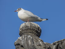 Seagull sitting on stone statue head Royalty Free Stock Photos