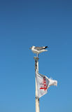 Seagull sitting on top of boat with Golden Gate Bridge flag Stock Images