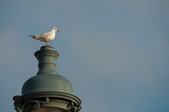 Seagull sitting on the top of a lamp Royalty Free Stock Photos
