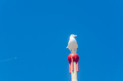 Seagull sitting on wooden post Royalty Free Stock Image