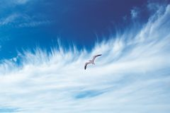 Seagull in sky Stock Images
