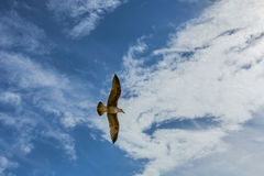 Seagull in sky with clouds and bright sun. On the sky of Lisbon stock image