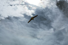 Seagull in sky with clouds and bright sun Royalty Free Stock Image