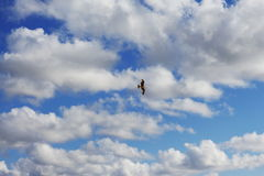 The seagull in the sky. A seagull flying in a blue sky with lot's of clouds Royalty Free Stock Photo