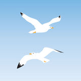 Seagull in the sky. Stock Image