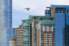 Seagull and skyscraper. Chicago, USA - May 24, 2014: Seagull flying in front of buildings in downtown Chicago Royalty Free Stock Images