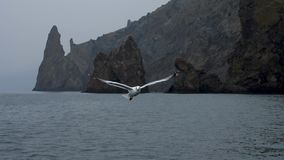 Seagull slow motion flight at backdrop of the rocks and catch pieces of the bread stock video