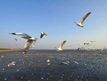 Seagull soar Stock Images