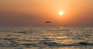 Seagull soaring Stock Photos