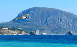 Seagull soaring in the blue sky. Against a background of mountains Royalty Free Stock Photography