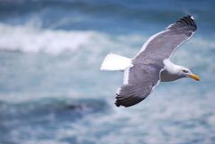 Seagull soaring high in the sky Stock Photo