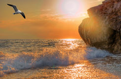 Seagull soaring over the sea stock image
