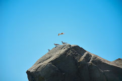 Seagull soaring in the sky above the rock Stock Image