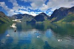 Seagull/Sognefjorden Royaltyfri Fotografi