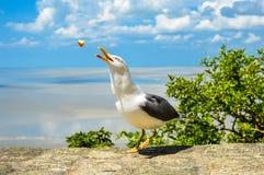 Seagull som äter bröd i en solig dag royaltyfri fotografi