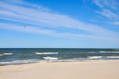 seagull som flyger över det baltiska havet Royaltyfri Foto