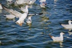Seagull som flyger över havet i sommar Tid Arkivbild