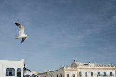 Seagull som flyger över orientalisk stad Arkivfoton