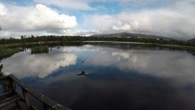 Seagull som flyger över ultrarapid för vatten för stillhetblåttdamm arkivfilmer
