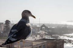 Seagull som håller ögonen på över en gammal hamn Royaltyfri Bild