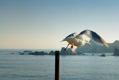 Seagull som hoppar av överkanten av en vertikal pol Arkivbild