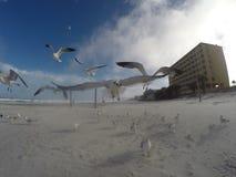 Seagull som nästan flyger kameran Arkivfoto