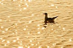 Seagull som svävar i havet Arkivbild