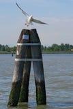 Seagull som tar av Royaltyfri Bild