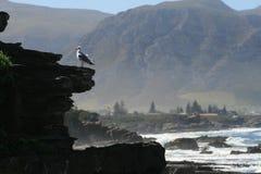 Seagull som tycker om sikten av Hermanus Royaltyfria Bilder
